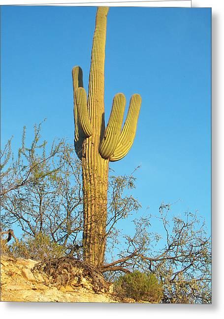Greeting Card featuring the photograph Saguaro Cactus by Daniel Hebard