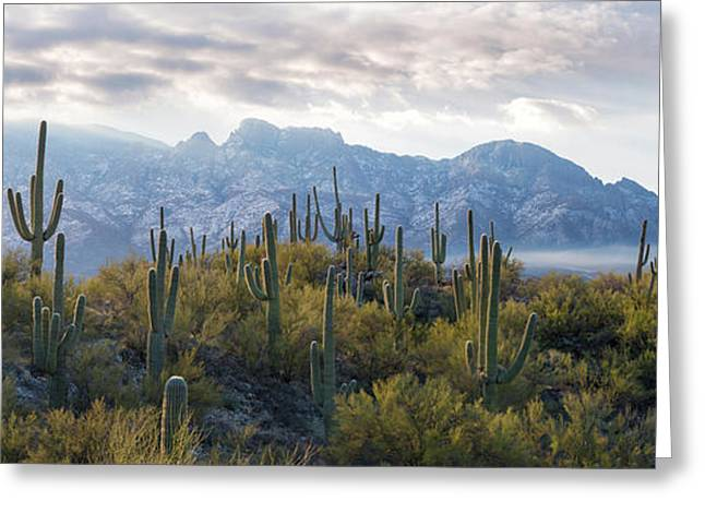 Saguaro Cactus With Mountain Range Greeting Card by Panoramic Images