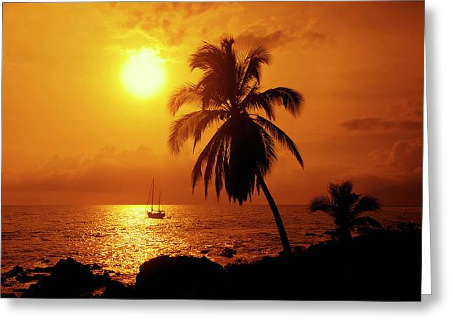 Sailboat And Palm Tree At Sunset Greeting Card by Ron Dahlquist