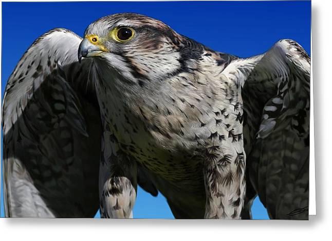 Saker Falcon Greeting Card by Owen Bell