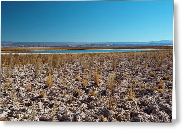 Salar De Atacama, Atacama Desert, Chile Greeting Card