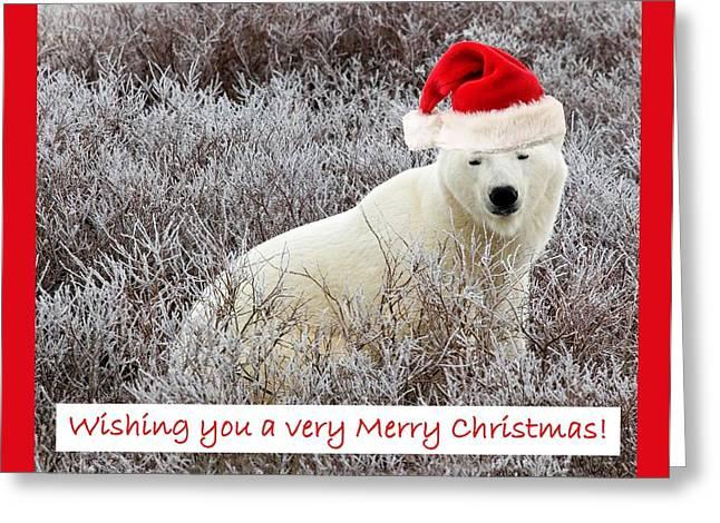 Santa Bear Greeting Card by Craig Brown