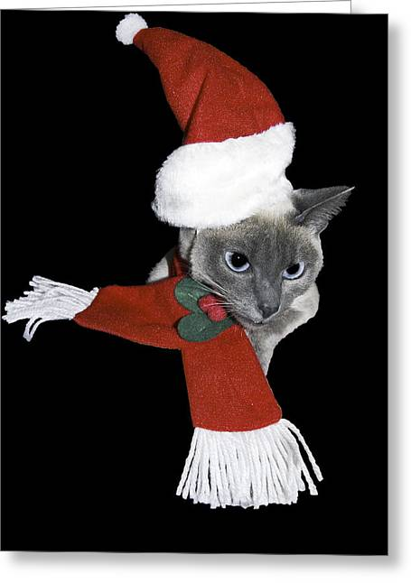 Santa Cat Greeting Card by Sally Weigand