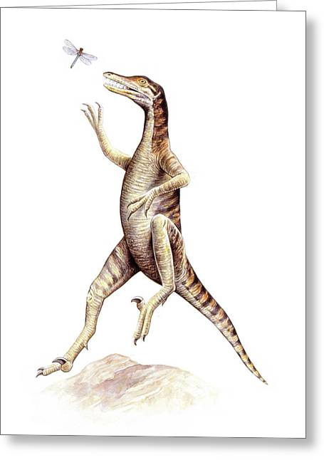 Saurornithoides Dinosaur Greeting Card by Deagostini/uig