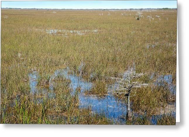 Sawgrass Prairie Greeting Card by Jim West