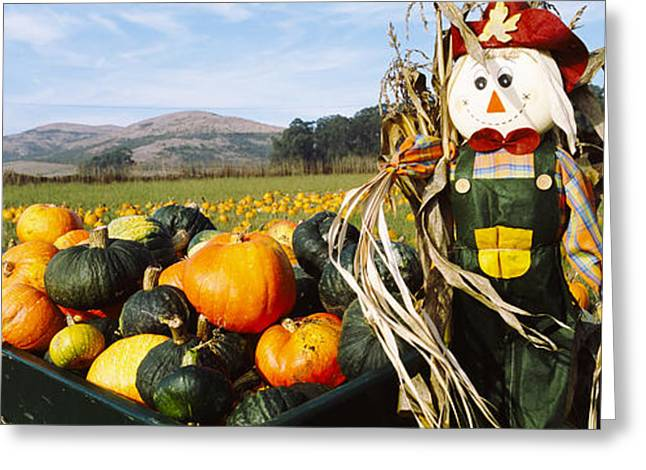 Scarecrow In Pumpkin Patch, Half Moon Greeting Card by Panoramic Images