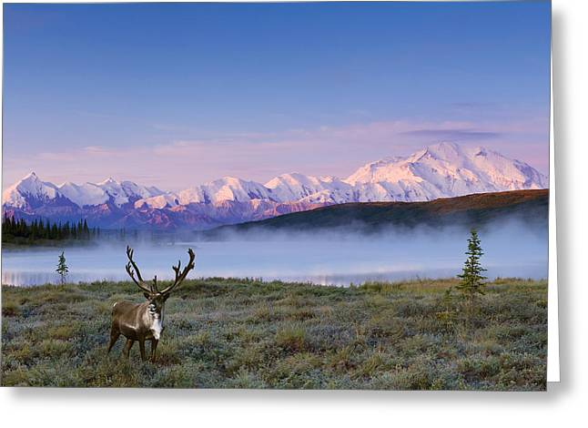 Scenic View Of Mt. Mckinley And Wonder Greeting Card by Michael DeYoung