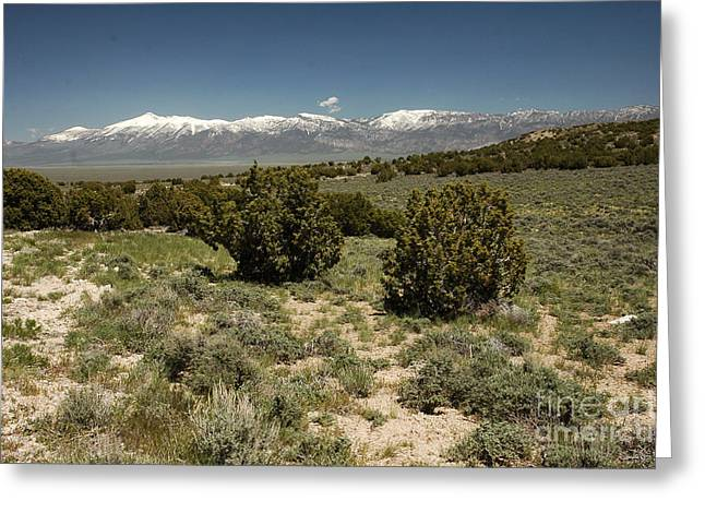618p Schell Creek Range Nv Greeting Card