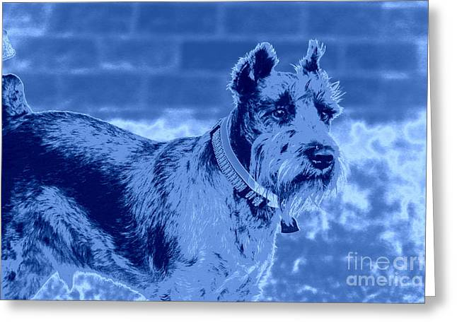 Schnauzer Greeting Card by Mickey Harkins