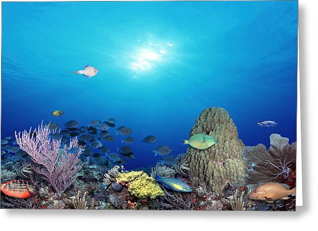 School Of Fish Swimming In The Sea Greeting Card by Panoramic Images