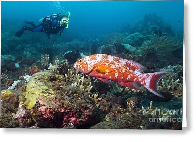 Scuba Diving, Bali Greeting Card by Georgette Douwma