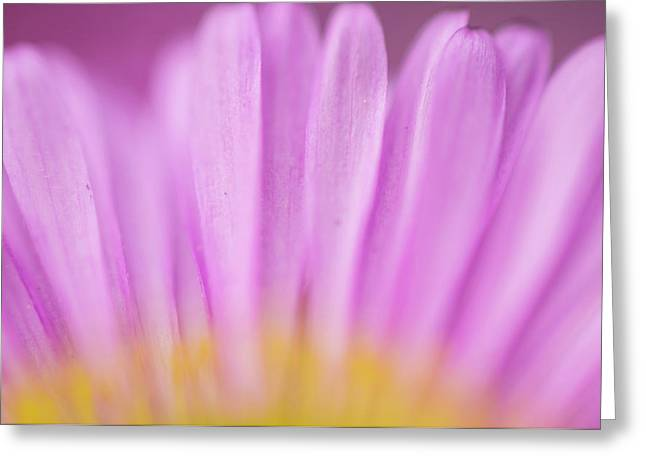 Sea Daisy, California Native Flower Greeting Card by Rob Sheppard