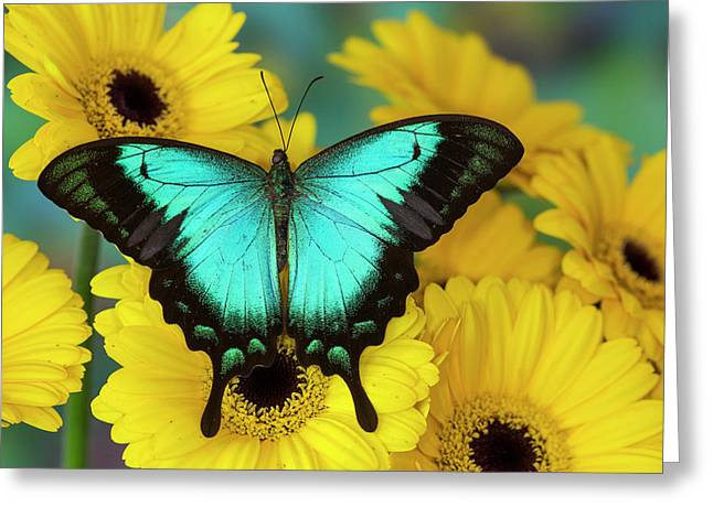 Sea Green Swallowtail Butterfly Greeting Card