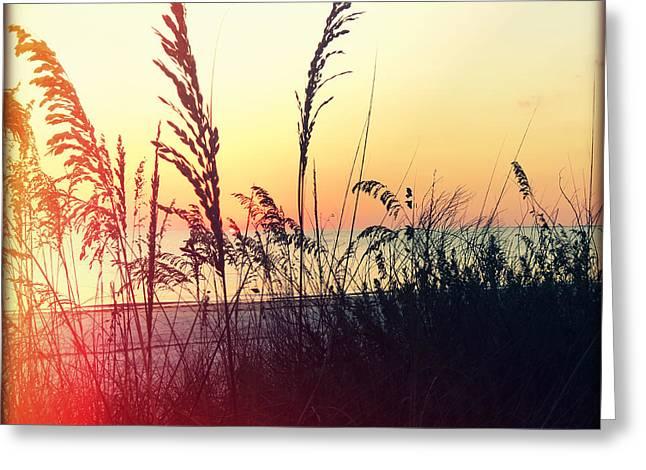Sea Oats At Sunset Greeting Card