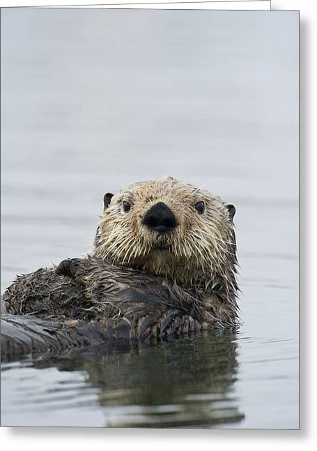 Sea Otter Alaska Greeting Card by Michael Quinton