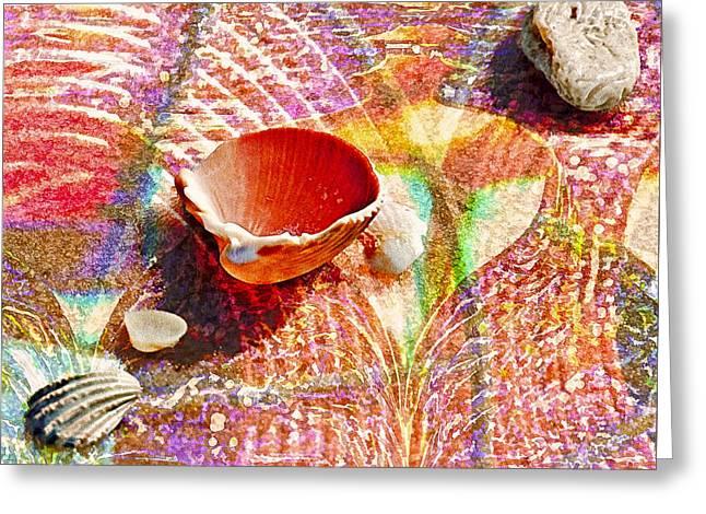Sea Shells In A Row Greeting Card