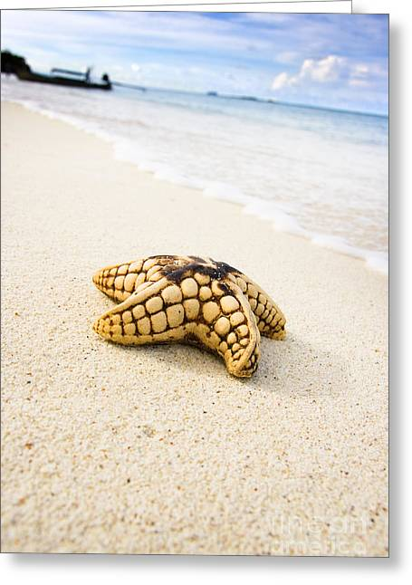 Sea Star On Beach Greeting Card by Jorgo Photography - Wall Art Gallery