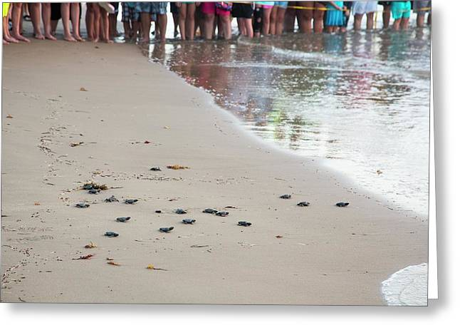 Sea Turtles Conservation Greeting Card