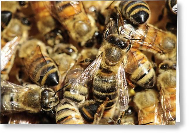 Seattle Honeybees In Beehive Greeting Card by Matt Freedman
