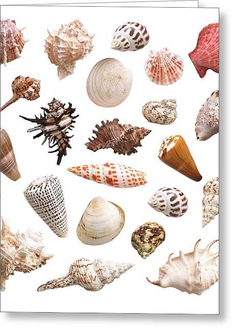 Selection Of Sea Shells Greeting Card