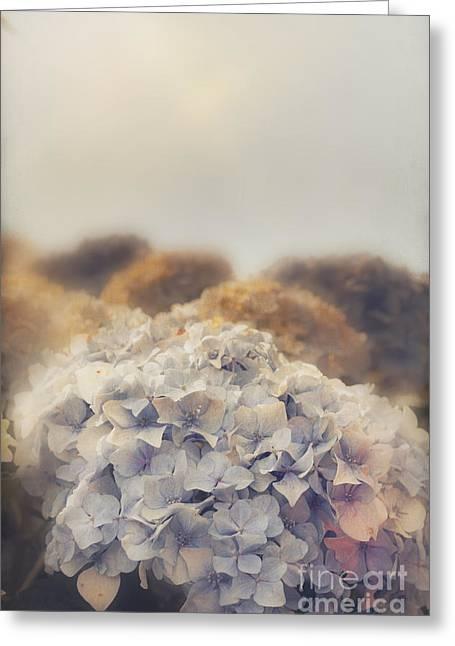 Shabby Pastel Flowers In Vintage Australian Style Greeting Card