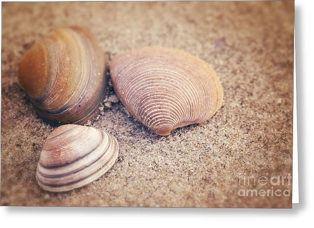Shells  Greeting Card by LHJB Photography