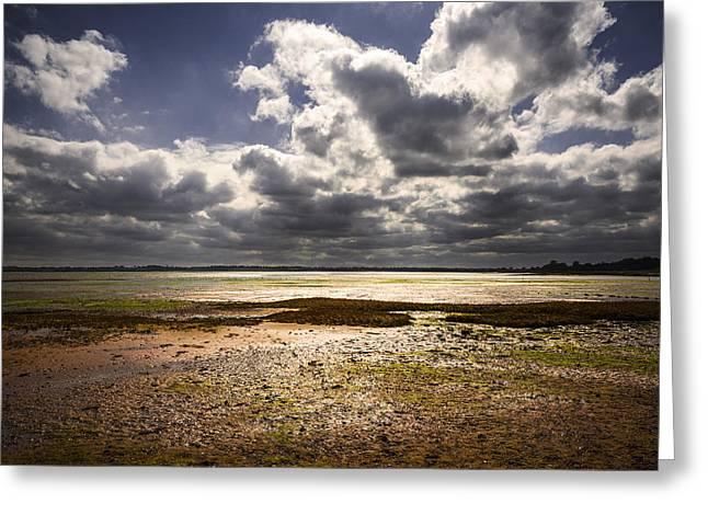 Shoreline Greeting Card by Svetlana Sewell