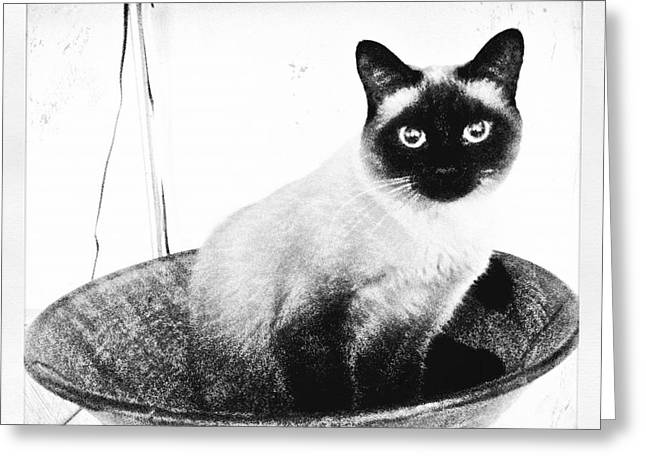 Siamese In A Bowl Greeting Card