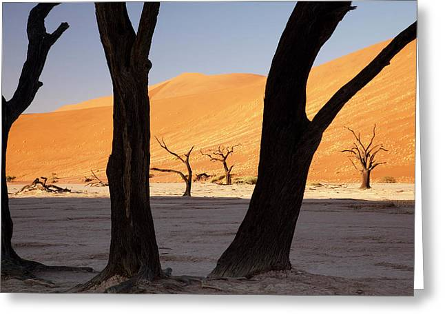 Silhouette Of Dead Tree And Sand Dunes Greeting Card by Jaynes Gallery