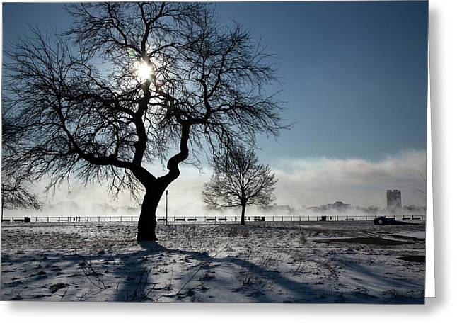 Silhouetted Tree In Winter Greeting Card
