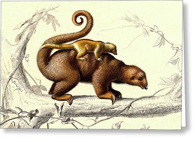 Silky Anteaters Greeting Card by Collection Abecasis