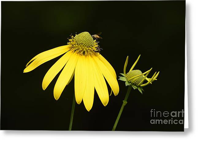 Simple Things Greeting Card by Randy Bodkins
