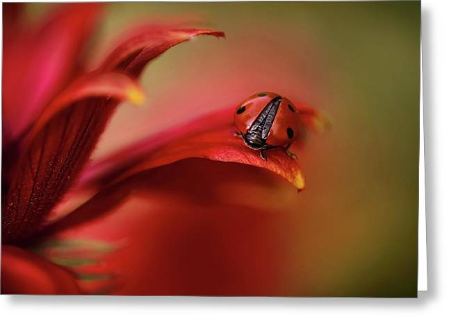 Simply Red Greeting Card by Mandy Disher