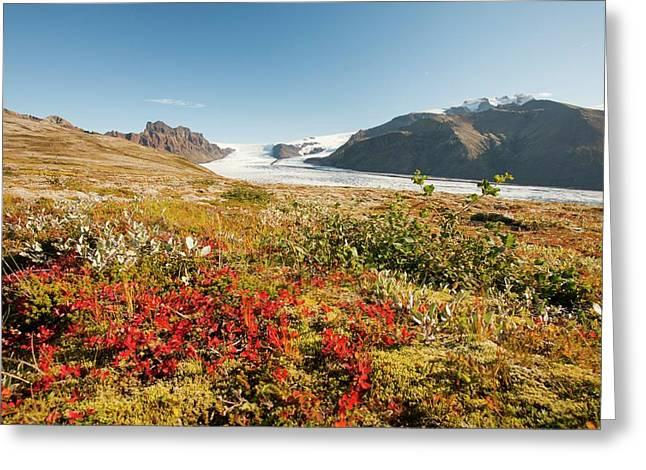Skaftafellsjokull Glacier Greeting Card