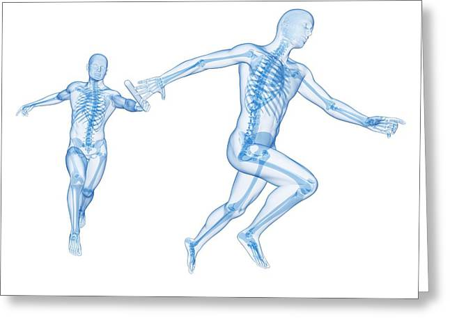 Skeletal System Of Runners Greeting Card