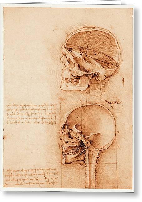 Skull Anatomy Greeting Card by Mehau Kulyk