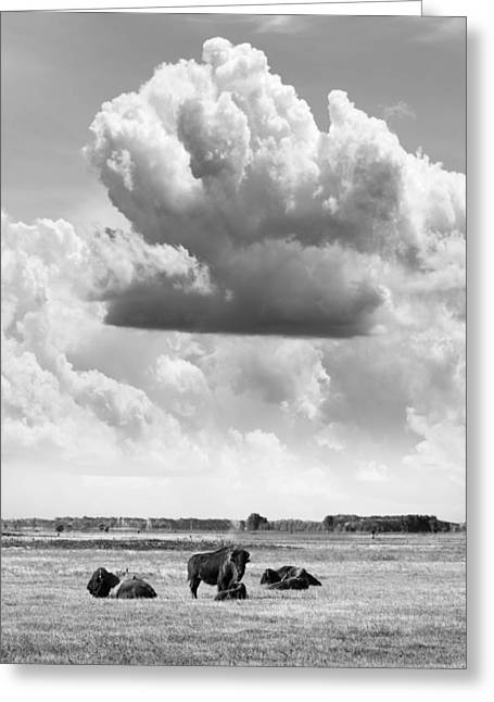 Small Group Of Buffalo On Grass Prairie Greeting Card