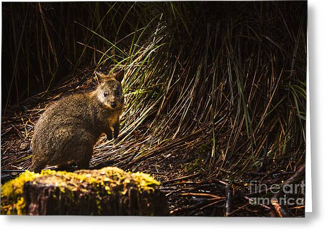 Small Marsupial Pademelon In Thick Tasmania Forest Greeting Card by Jorgo Photography - Wall Art Gallery