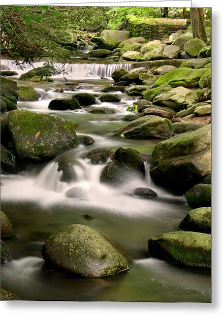 Smoky Mountain Stream Greeting Card by Cindy Haggerty