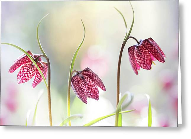 Snakes Head Fritillary Greeting Card