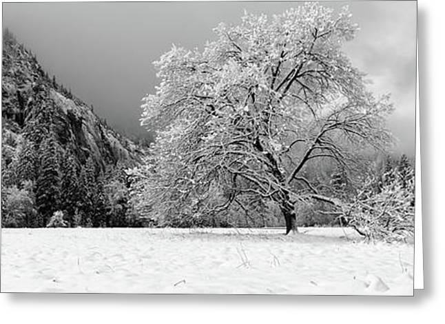 Snow Covered Oak Tree In A Valley Greeting Card by Panoramic Images