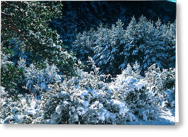 Snow Covered Pine And Fir Trees Greeting Card