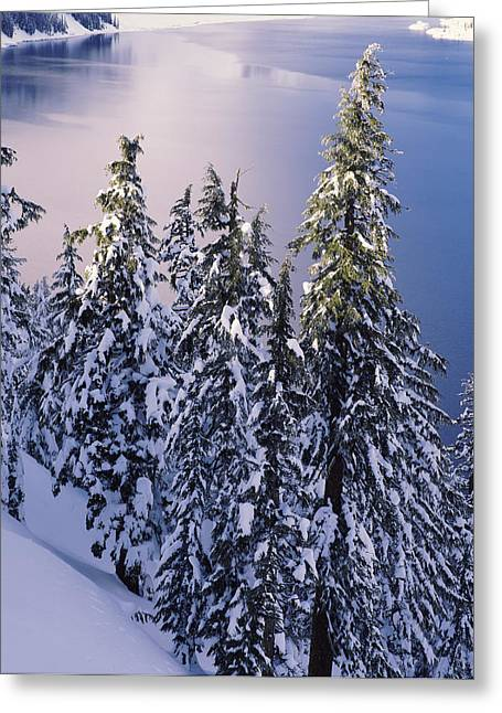 Snow Covered Trees At South Rim, Crater Greeting Card