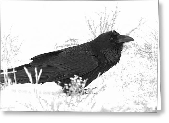 Snow Raven Greeting Card