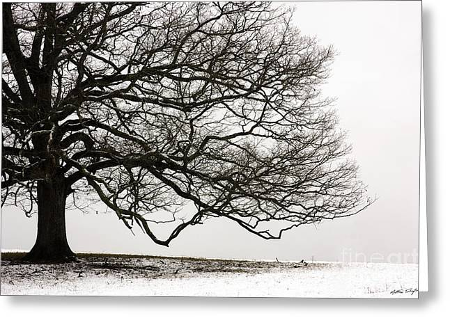 Snow Tree 2010 Greeting Card