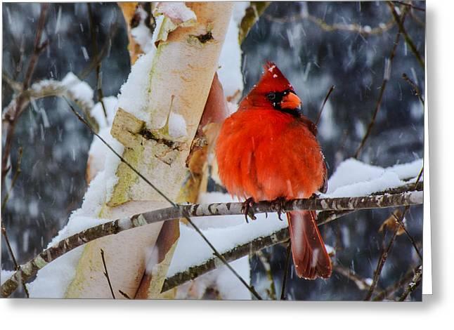 Snowbird  Greeting Card
