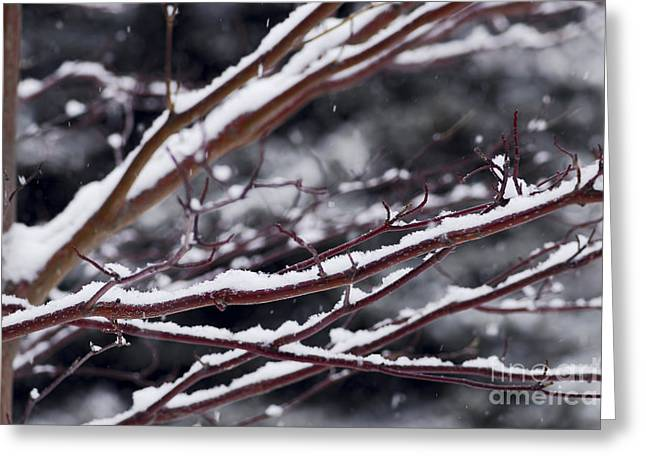 Snowfall And Tree Greeting Card