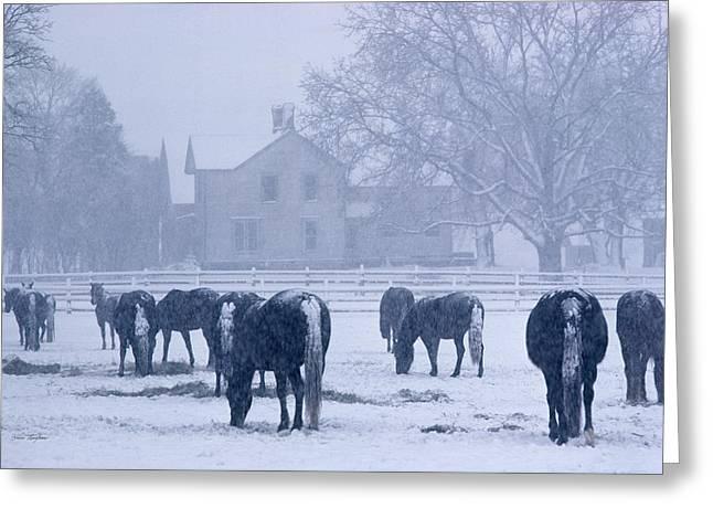 Snowfall Corral Greeting Card