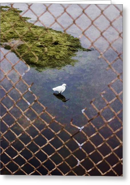 Snowy Egret  Greeting Card by Photographic Art by Russel Ray Photos