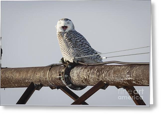 Snowy Owl In Kenosha Greeting Card by Ricky L Jones